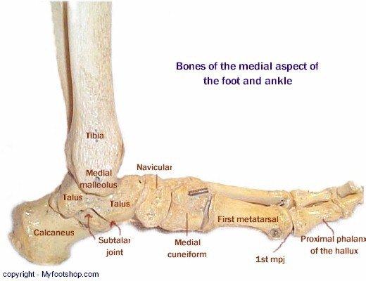 Bone Medial Mod - Labeled   MyFootShop.com