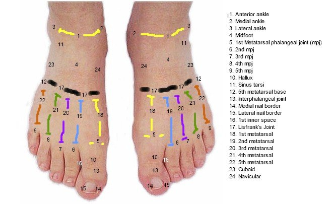DP Foot Mod Topography - Labeled