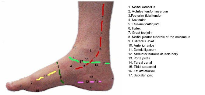 Medial Foot Mod Topography - Labeled