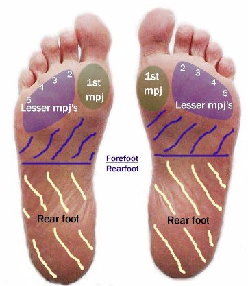 Plantar Foot Mod MPJ's - Labeled