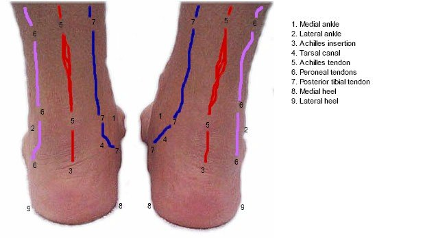 Posterior Foot Mod Topography - Labeled