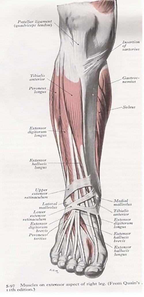 Shin Splints Causes Contributing Factors And Treatment Options